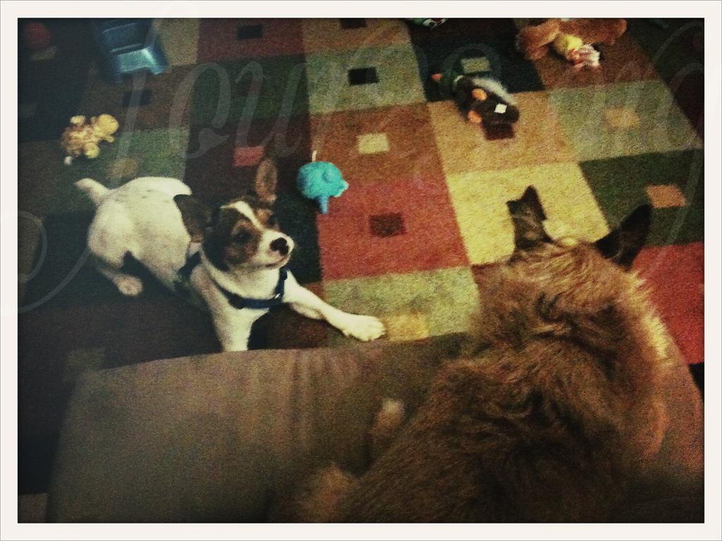 Sammy & Baxter