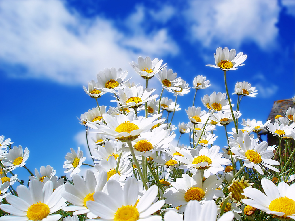 Spring Daisies!