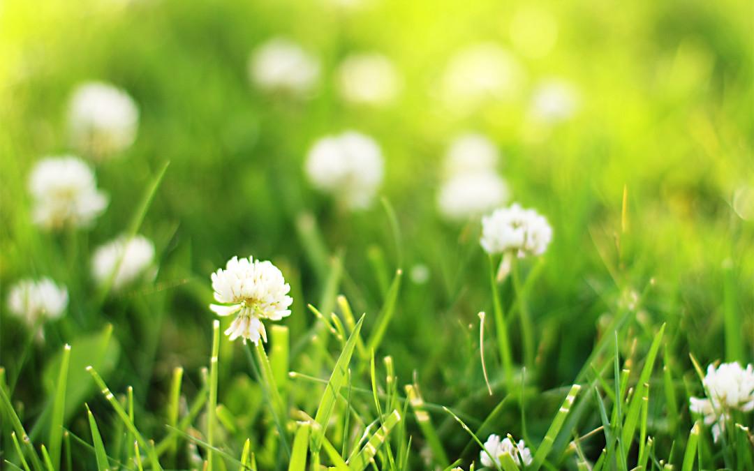 Srummer Grass